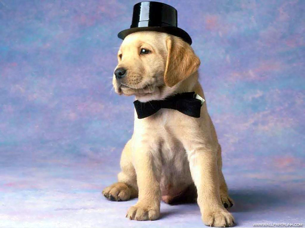 帽子を被ったかわいい子犬